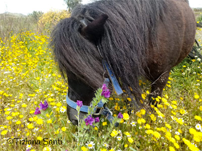 pony in meadow